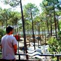 Foto de Camping Vale Paraiso en Nazaré
