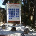camping francas 6911