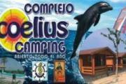 Coelius
